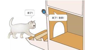 愛貓工程師幫流浪貓打造一個AI人工智慧的家,還具有貓臉辨識呢!!