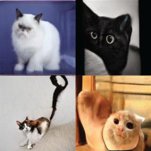 人臉可以透過人工智慧合成,那貓臉可以嗎?喵喵合成後居然長這樣!?