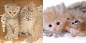 你玩過人工智慧合成人臉,但你聽過貓也可以合成嗎? 貓咪合成後竟變這樣?
