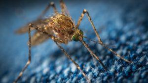 人工智慧幫你鎖定惱人蚊子行蹤!!讓你不再找不到兇手!!