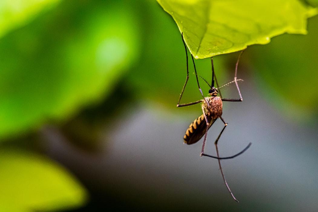 人工智慧能定位蚊子所在地還能順便殺死他?!真的嗎?