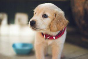 人工智慧寵物Aibo能取代真寵物嗎?(上)