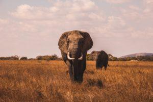 AI人工智慧也能保育動物愛地球?(上)
