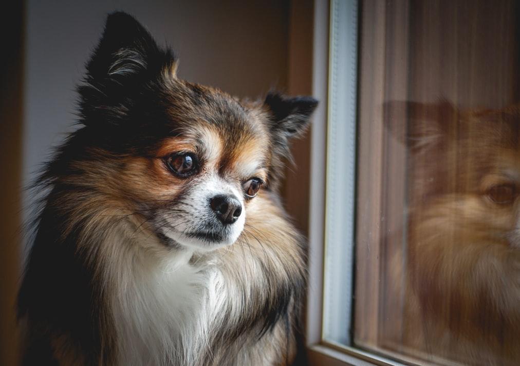 人工智慧寵物Aibo能取代真寵物嗎?(下)