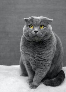 人工智慧工程師鏟屎官發明這個杜絕愛貓叼獵物家~