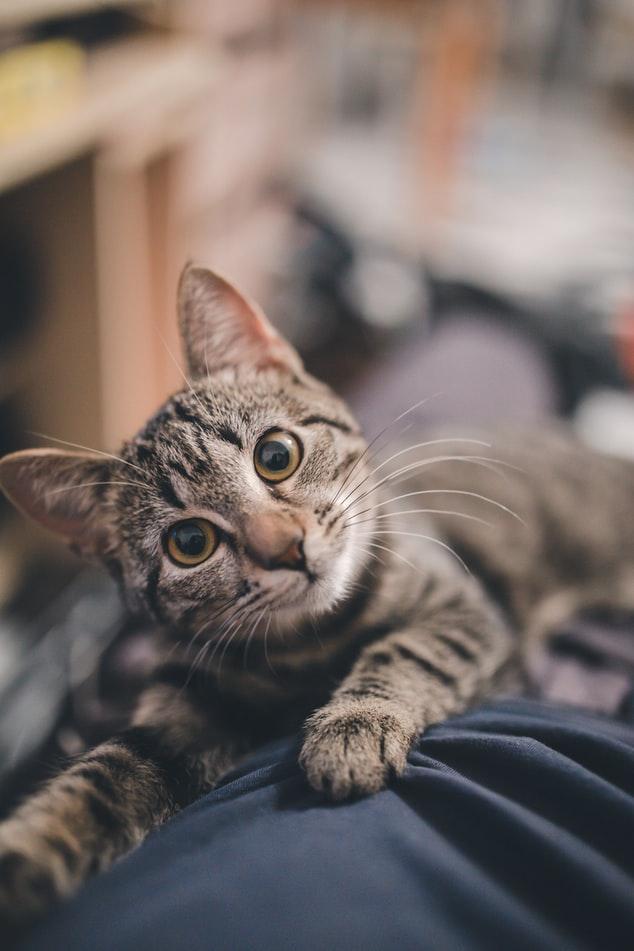 AI人工智慧命名大崩壞:貓咪名字篇