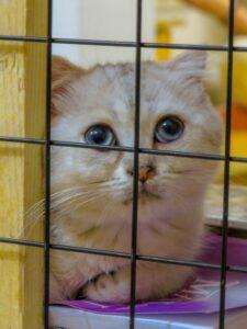 人工智慧貓砂盆問世!!全面掌控愛貓健康!!(1)