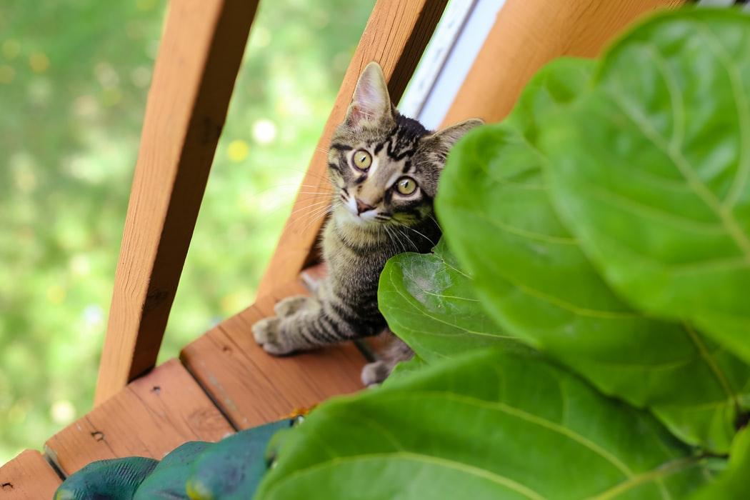 暖心貓奴工程師開發人工智慧貓咪庇護所,給流浪貓一個家~(下)