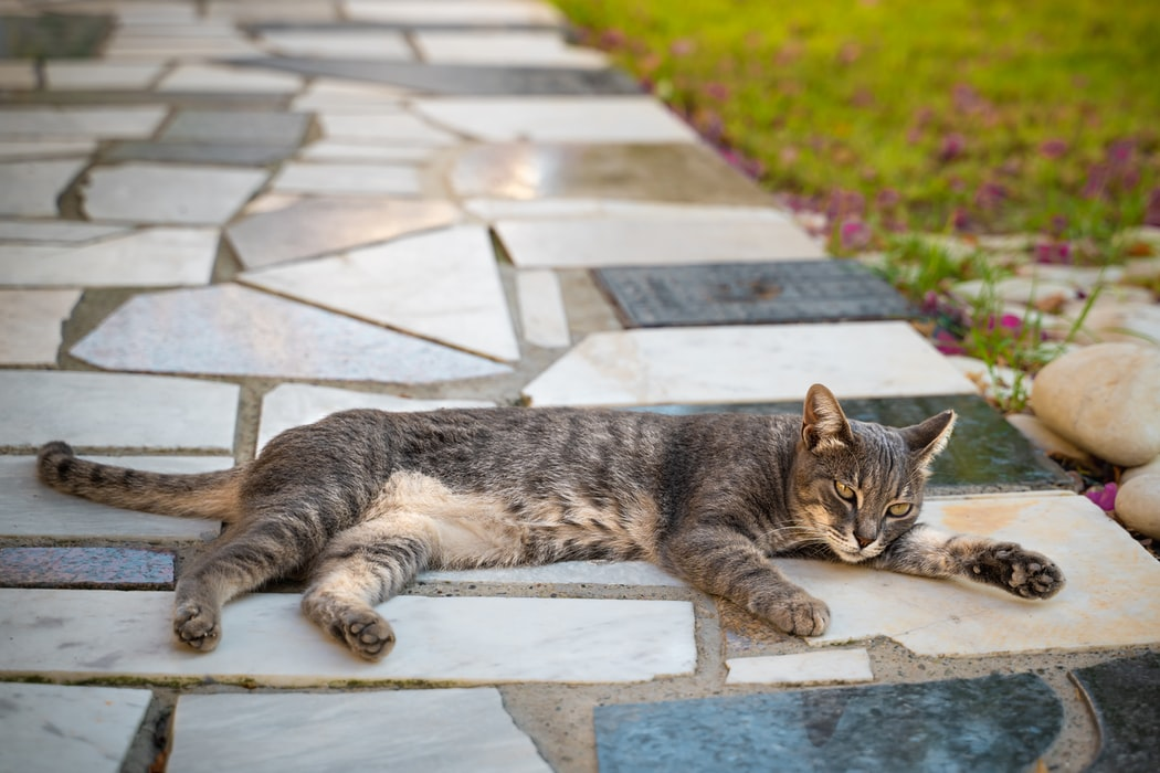 暖心貓奴工程師開發人工智慧貓咪庇護所,給流浪貓一個家~(上)
