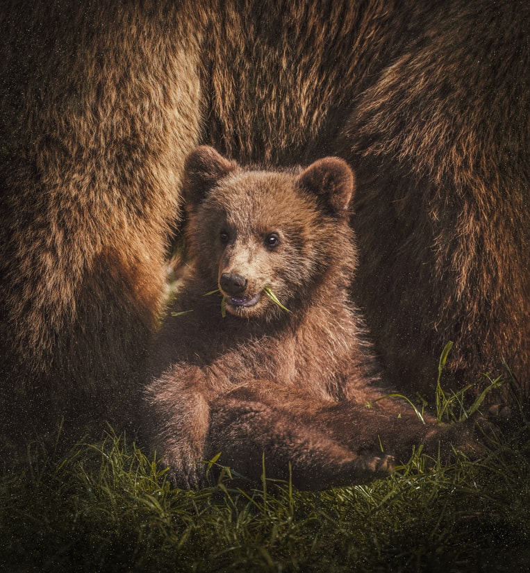 保育棕熊就交給人工智慧熊臉辨識吧!!