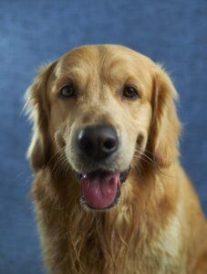 人工智慧連導盲犬的工作也要搶?!導盲犬要被取代了?!